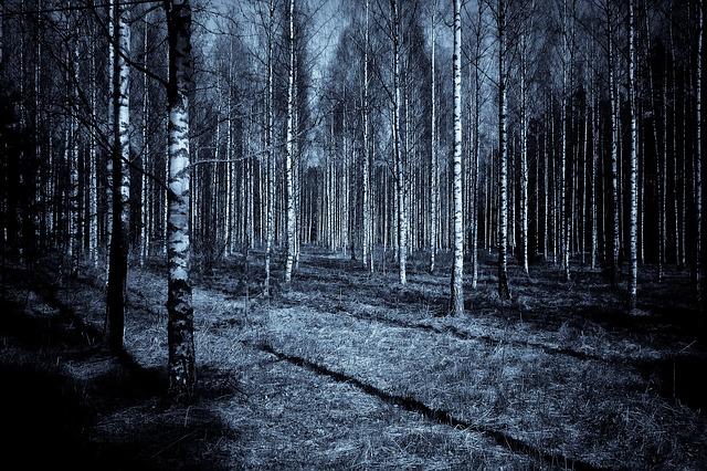 les, noc, děsivé, tajuplno