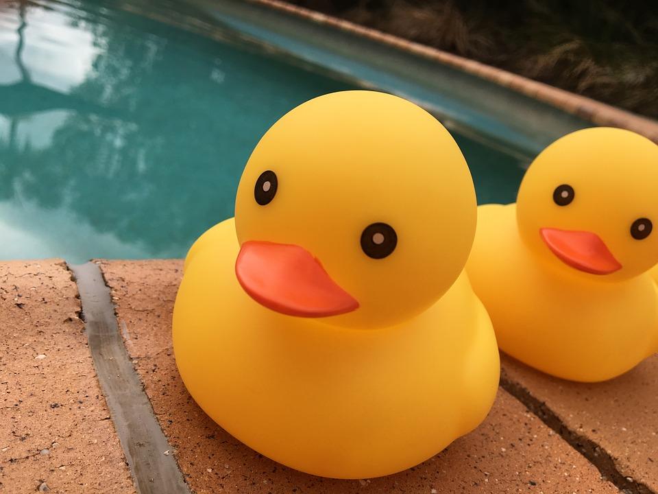 kačenky u bazénu